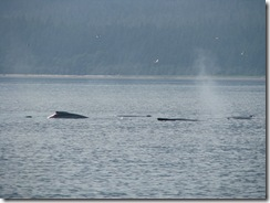 4526 Whale Watching Juneau AK