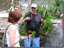 7636 Rainbow Lorikeet Coral World Charlotte Amalie St Thomas USVI