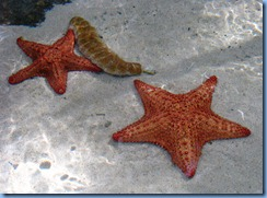 Star Fish & Sea Cucumbers