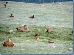 8592 Mule Deer on US 34 EB through RMNP