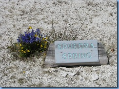 9021 Ephedra Spring West Thumb Geyser Basin YNP WY