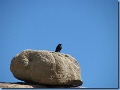 3006 Jumbo Rock Joshua Tree National Park CA