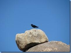 3011 Jumbo Rock Joshua Tree National Park CA