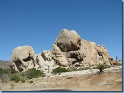 2957 Joshua Tree National Park CA