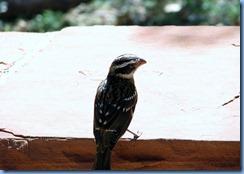 3480 Weeping Rock Zion National Park UT