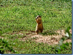 5960 Prairie Dog Days Inn Cortez CO