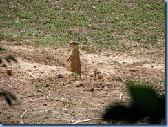 5965 Prairie Dog Days Inn Cortez CO
