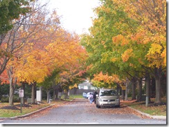 Colores del Otono (Fall) 003