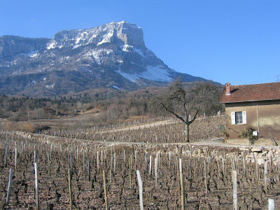 Apremont vineyards in winter with Mont Granier