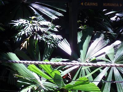 Some vegetation struggling to get sunlight