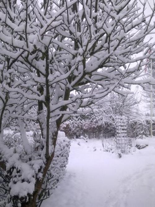 Vinterbilleder 2010 011