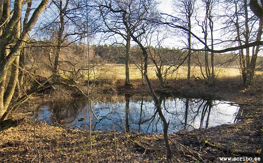 Maligrop eller Malins grop, en lite damm vid sidan av Fyrisån