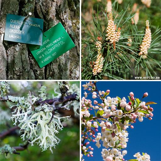 Fyra bilder på växter i Genetikcentrums park
