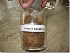 alstonia scholaris specimen pharmacology