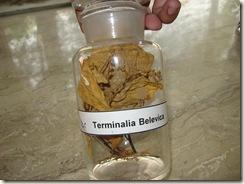 terminalia belevica specimen pharmacology lab specimen