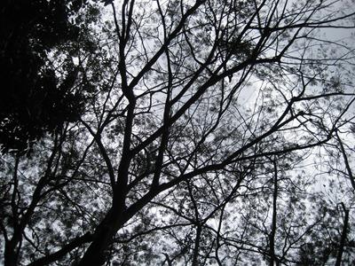 IMG_4419