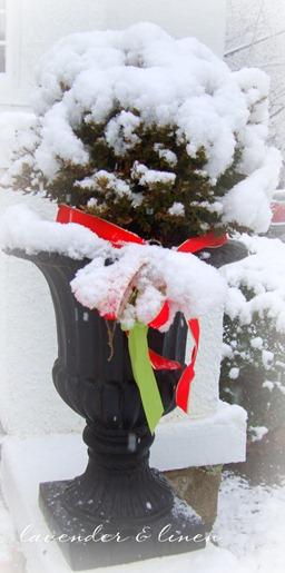 christmas 2010 012-1
