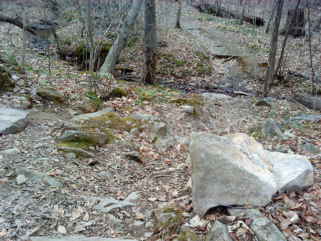 rocky descent on the Loblolly Trail