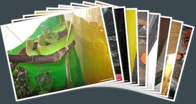 Vizualizare Expo reptile