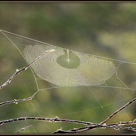 Webs by Romano Volker - Nature Up Close Webs