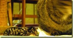 felicia and kitten 1