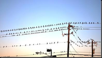 2010-12-08 Birds on line