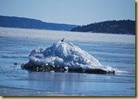 Huk - is på skjær med måke