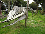 Whale skeleton at a rustic museum