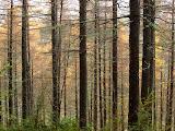 Hamner Forest Park