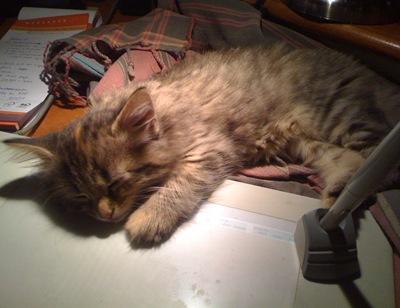 cat-pics-20.092010-043
