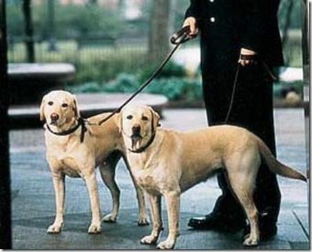 dog walker_Argentina_Petsventura