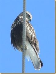 eagle marsh, feb 1, 09 (3) (Medium)