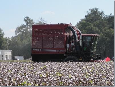 October farm 2010 001