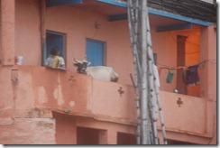 India 2010 -Varanasi  ,  paseo  en barca por el Ganges  - 21 de septiembre   66