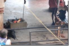 India 2010 -Varanasi  ,  paseo  en barca por el Ganges  - 21 de septiembre   173