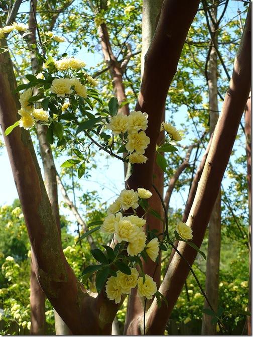 treeblooms