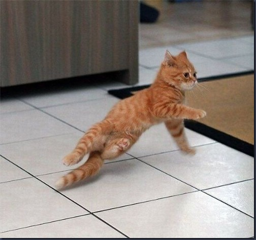 break,dance,cat,cute,dancing,funny,kitty-f081f8242fcc43bdeab7397204ed99ae_h