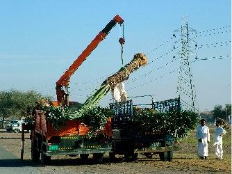 DSCF4183-2005-03-28-10-46.jpg