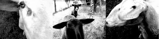 sheepcomposite1-2005-08-18-10-46.jpg