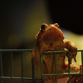 i'm free! by Frank Vomit - Animals Amphibians ( climbing, macro, action, frogs, amphibians,  )