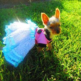 Princess  by Romana Mair - Animals - Dogs Puppies ( animals, puppies, pup, puppy, dog )