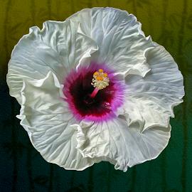 by Joseph Vittek - Flowers Single Flower ( plant )