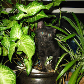 Just 6 months ago! by Maureen Richardson - Animals - Cats Kittens