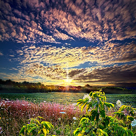 From Here To Eternity by Phil Koch - Landscapes Prairies, Meadows & Fields ( wisconsin, vertical, yellow, phil koch, leaves, spring, photography, sky, nature, tree, horizons, office, clouds, orange, park, green, horizon, scenic, shadows, farming, field, red, blue, sunset, fall, meadow, trees, sunrise, landscapes, floral )