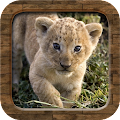 Download Animal Sounds APK for Android Kitkat
