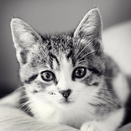 by Tiona Anglin Appel - Animals - Cats Kittens