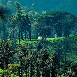 by Govind Raturi - Novices Only Landscapes