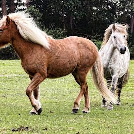 Playtime by John Phielix - Animals Horses ( farm, field, gras, animals, horses )