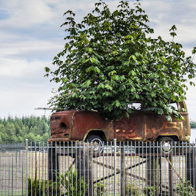 VW Tree by Brian Stout - Transportation Automobiles ( vw, abstract, bus, tree, crazy, art )