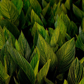 Patterns by Carl Testo - Nature Up Close Leaves & Grasses ( pow, symmetry, leaves )